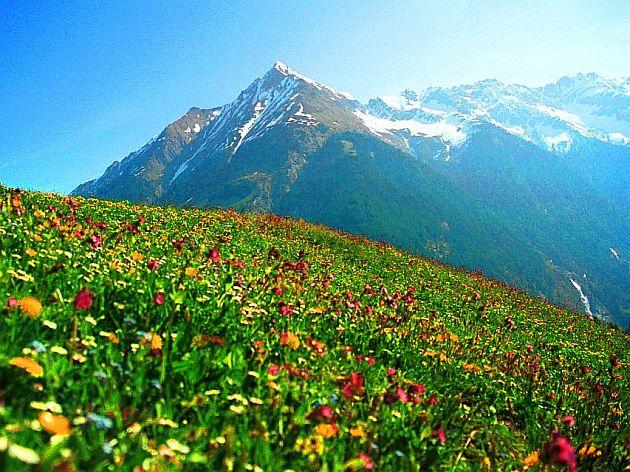 שדה צמחים להפקת שמנים אתריים דוטרה